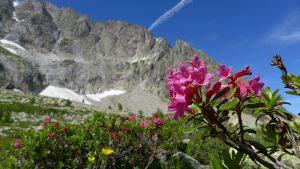 Alpenrose, Cassina Baggio Südwand